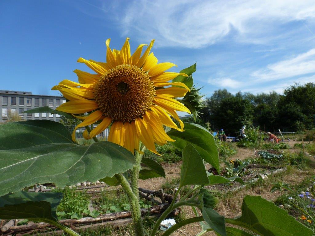 Regiotreffen Gemeinschaftsgärten